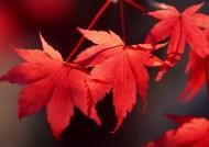 秋季动植物图片(26张)