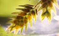 植物花卉微距摄影图片(40张)