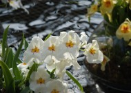 美国长木公园花卉图片(13张)