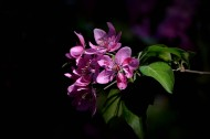 春天怒放的鲜花图片(8张)