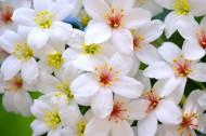 纯洁的白色小花图片(21张)