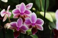 美丽的兰花图片(9张)