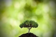 清新绿色植物图片(15张)