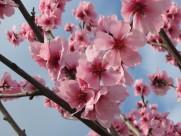 热闹开放的梅花图片(14张)