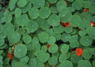 绿色植物背景图片(25张)