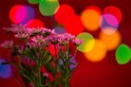 花束图片(13张)