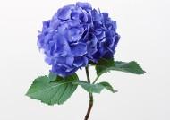 紫色花朵图片(14张)
