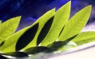 植物花卉微距摄影图片第二组(20张)