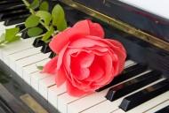 玫瑰花朵与钢琴图片(16张)