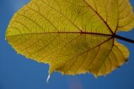 树叶图片(10张)