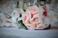 粉色的玫瑰花图片(17张)