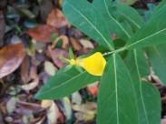 黄色的花朵图片(14张)