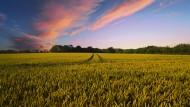 广阔的稻田图片(12张)