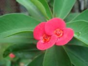 八仙紫阳花图片(27张)
