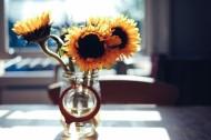 花瓶里的花朵图片(20张)