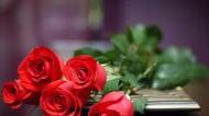 鲜艳玫瑰花图片(6张)