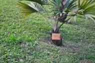 蓝脉葵-植物图片(6张)