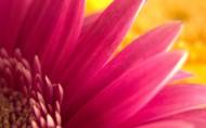 美丽的鲜花图片(15张)