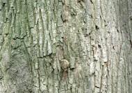 树皮图片(20张)