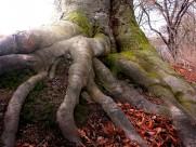 奇形怪状的树根图片(13张)