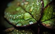 微距植物图片(8张)