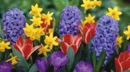 美丽鲜花图片(20张)