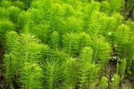 绿色植物图片(7张)