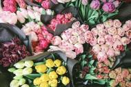 唯美靓丽的鲜花和花束图片(14张)