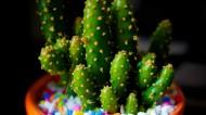 多肉植物图片(6张)