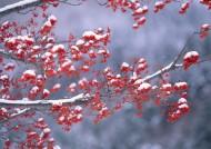 雪中植物花朵图片(20张)
