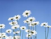 阳光下的鲜花图片(19张)