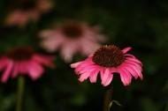 左海菊花图片(9张)