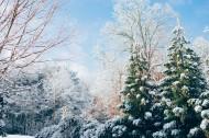 美丽的雪松图片(14张)