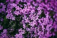 大自然中花草树木的特写图片(10张)