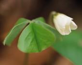 漂亮的白色野花图片(14张)