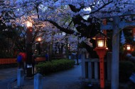 夜晚的樱花图片(9张)