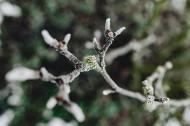 冰冻的树叶和树枝图片(14张)