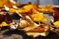 秋天的落叶图片(10张)