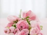 粉色的玫瑰花束图片(10张)