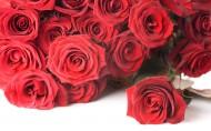 美丽动人的玫瑰花图片(14张)