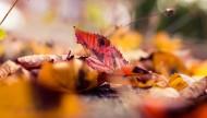 深秋泛黄的落叶图片(10张)