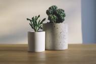 精致的盆栽图片(11张)