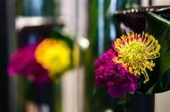 五颜六色的鲜花图片(10张)