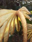 野外的植物图片(11张)