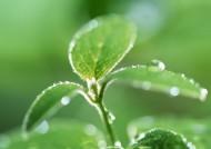 绿叶上的水珠图片(20张)