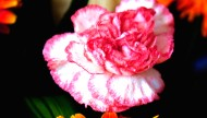 美丽插花图片(11张)