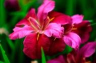 唯美线绘花朵图片(7张)
