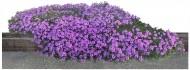 白色背景花丛图片(27张)