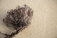 沙滩上死掉的干植物图片(12张)