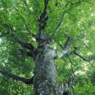树木倩影图片(25张)
